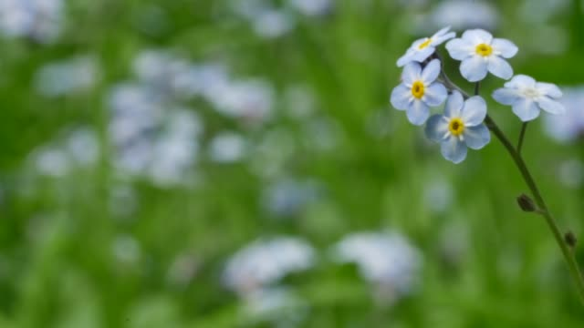 detail of small white flowers - baden wurttemberg stock videos and b-roll footage