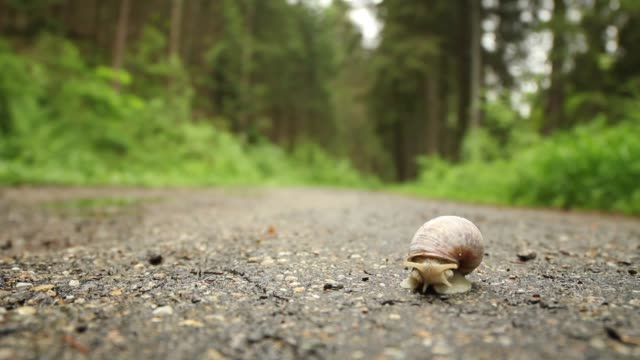 detail of snail (helix pomatia) crossing road - snail stock videos & royalty-free footage