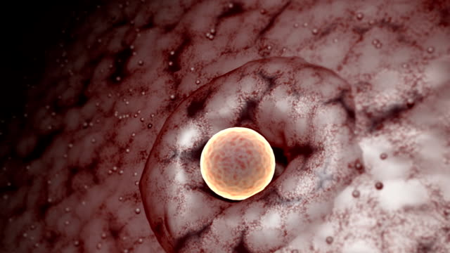 A detail of the release of an ovum from the ovary in a microscopic view.
