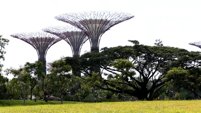 detail of the supertree grove at gardens by the bay on february 22 2013 in singapore the 250 acre nature park located next to marina bay opened mid... - grove stock videos & royalty-free footage