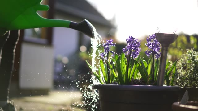 detail of watering can, watering flowers in garden - watering can stock videos & royalty-free footage