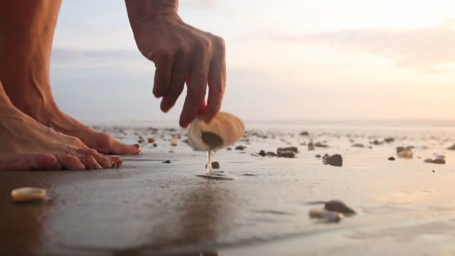 stockvideo's en b-roll-footage met detail of woman beachcombing on tidal flat, at sunrise - schild lichaamsdeel van dieren