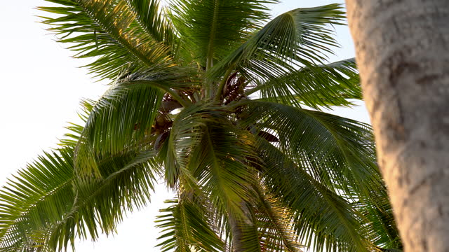 detail shot of a palm tree on the beach - swaying stock videos & royalty-free footage