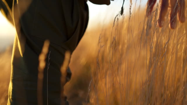 detail shot of a park ranger hiking up a hill through tall grass at sunset - durmitor national park stock videos & royalty-free footage