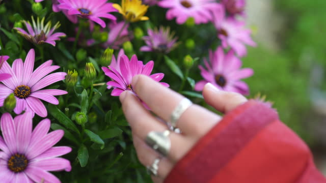 vidéos et rushes de detail shot of a woman touching pink flowers - fragilité