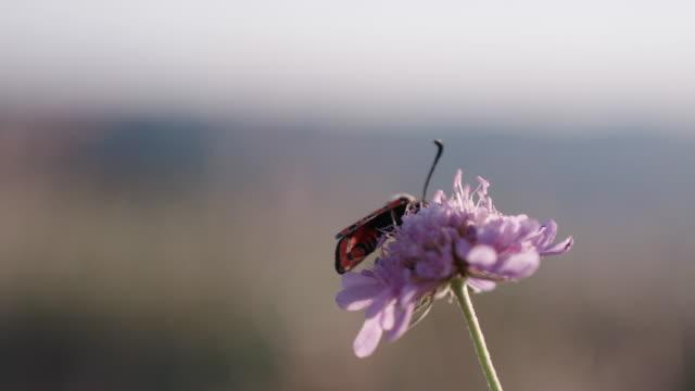 detailaufnahme eines insekts auf einer wildblume - insekt stock-videos und b-roll-filmmaterial