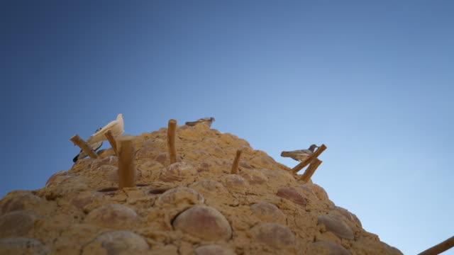 stockvideo's en b-roll-footage met detail shot van duiven op een klei structuur in egypte - vier dieren