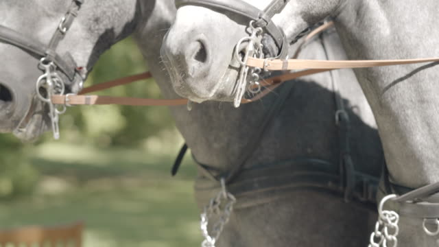 details of horses pulling carriage through town - carriage stock videos & royalty-free footage