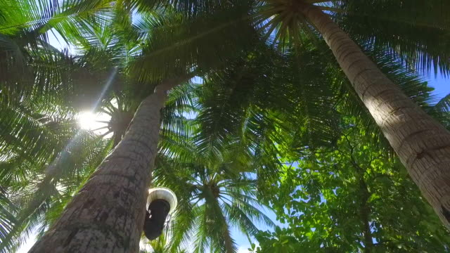 stockvideo's en b-roll-footage met details of palm fronds and palm trees on a tropical island. - slow motion - varenblad