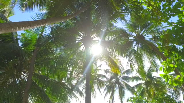 details of palm fronds and palm trees on a tropical island. - slow motion - palm tree stock videos & royalty-free footage