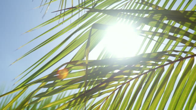 details of palm fronds and palm trees on a tropical island. - palm leaf stock videos & royalty-free footage