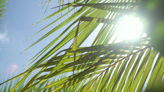 details of palm fronds and palm trees on a tropical island. - palmenblätter stock-videos und b-roll-filmmaterial