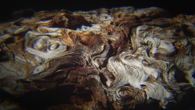MS ZO Details of wood /  Bandon, Oregon, USA