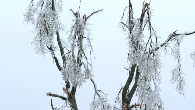 devastation after an ice storm - frost stock videos & royalty-free footage
