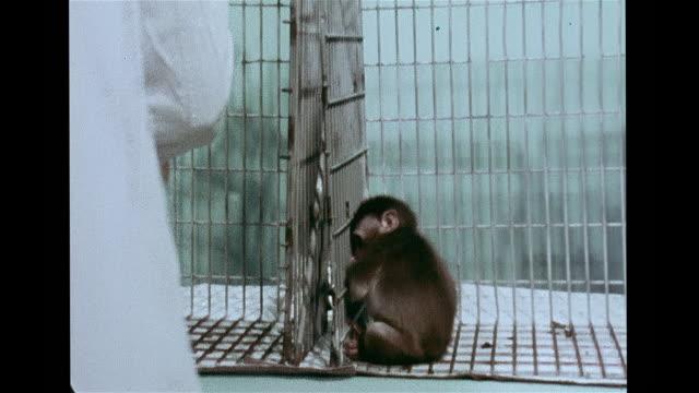 stockvideo's en b-roll-footage met vs developmental psychologist james w prescott isolation raised monkey rocking in cage dr prescott moving another in both staying away from each... - geestelijke gezondheidszorg