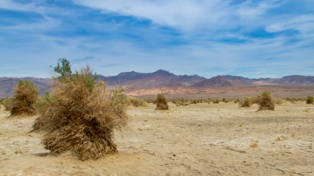 devil's cornfield in death valley, california - lake bed stock videos & royalty-free footage