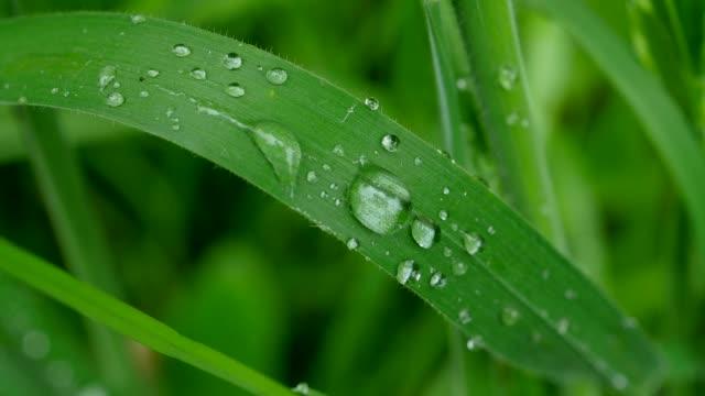dew drop on blade of grass - blade of grass点の映像素材/bロール