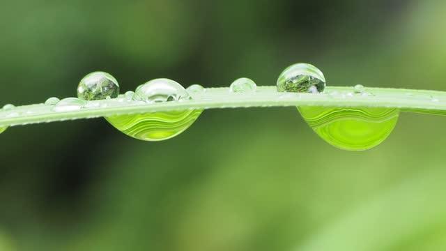 dew drop on leaf grass - morning dew stock videos & royalty-free footage