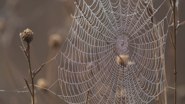 dew drops in spiders web at a foggy autumn day. bavaria, germany. - spider web stock videos & royalty-free footage