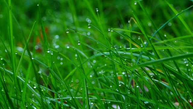 stockvideo's en b-roll-footage met dew drops on culm, freudenburg, rhineland-palatinate, germany, europe - dauw