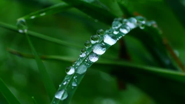 dew drops on culm, freudenburg, rhineland-palatinate, germany, europe - dew stock videos & royalty-free footage