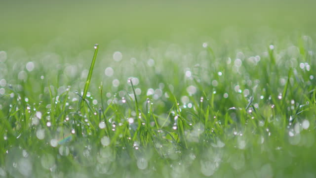 vídeos de stock e filmes b-roll de dew drops on grass at morning, back lit. bavaria, germany, europe. - back lit