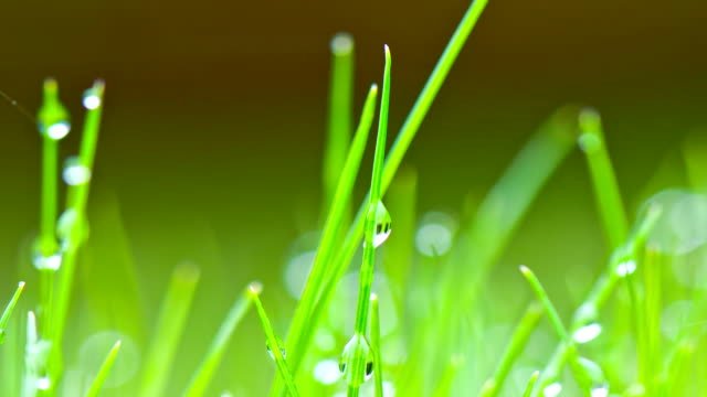 dew drops on morning grass - blade of grass stock videos & royalty-free footage
