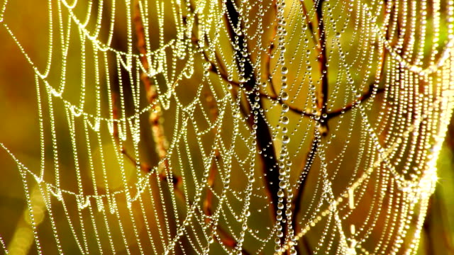 dew like diamonds - spider web stock videos & royalty-free footage