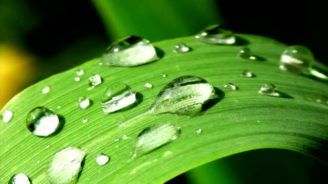 hd macro: dew on a green leaf - blade of grass stock videos & royalty-free footage