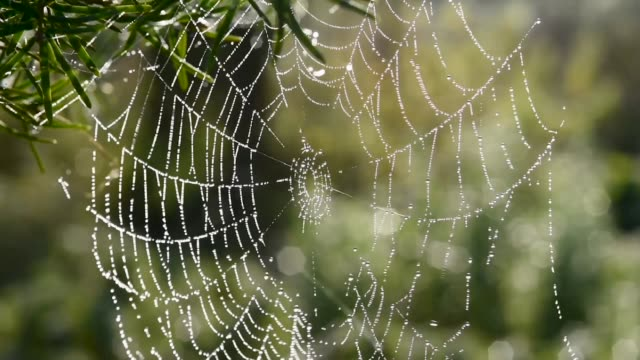 Dew on a spiders web-Autumn