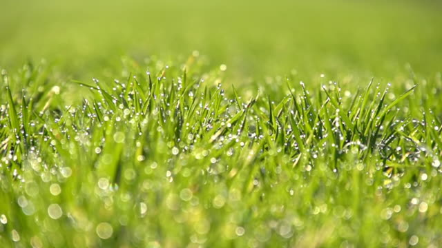 HD SUPER SLOW MOTION: Dew Sparkling On Green Grass