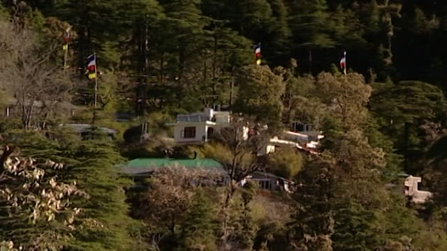 dharamsala, india. from a white building bunted with raised blue, white, red, green, and yellow prayer flags to an array of hemlock trees - pinaceae stock videos & royalty-free footage