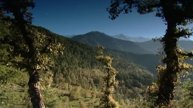 dhauladhar mountains, dharamsala. silhouetted himalayan hemlock trees before a lushly vegetated and mountainous landscape. - pinaceae stock videos & royalty-free footage