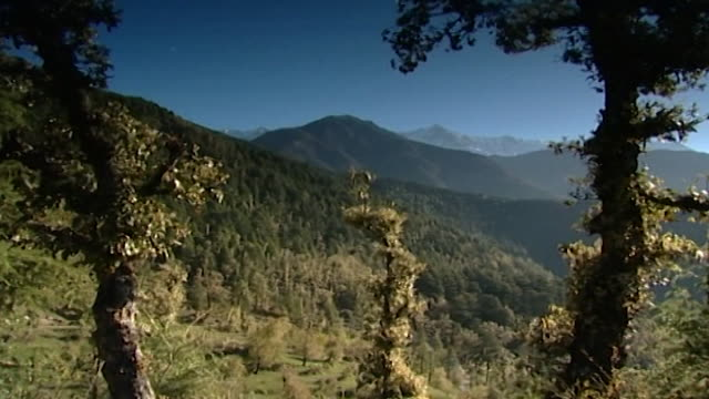 dhauladhar mountains, dharamsala.view of silhouetted himalayan hemlock trees with a lushly vegetated, and mountainous landscape in the distance. - pinaceae stock videos & royalty-free footage