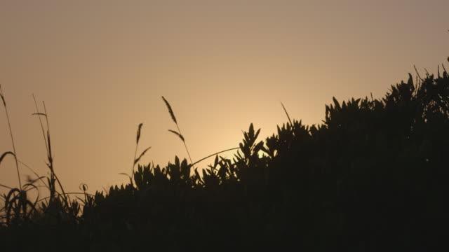 vídeos de stock, filmes e b-roll de diagonal line of silhouetted vegetation at sunset - enviesado