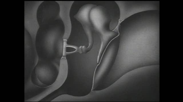 diagram of the interior of the ear with arrows pointing at different parts, ear reacting to vibrations - 1940 1949 bildbanksvideor och videomaterial från bakom kulisserna