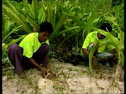 Dicaprio film row Dicaprio film row ITN Boats on beach People across beach from boats Men planting plants on beach Area of beach fenced off for...