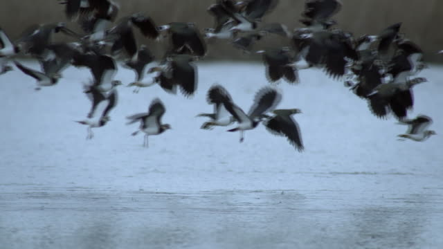 Different birds taking off and landing on the lake