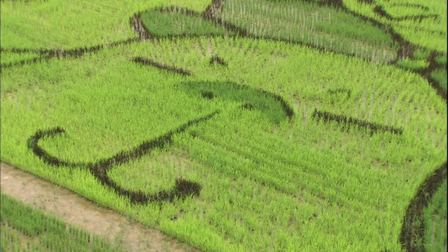 different colored rice creates a mural of animals in a large rice paddy. - asahikawa stock videos & royalty-free footage