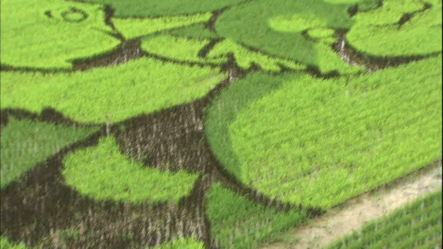 different colored rice plants create a mural of zoo animals in a japanese rice paddy. - asahikawa stock videos & royalty-free footage