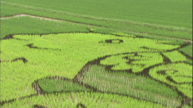 different colored rice plants form a mural of animals in a large rice paddy. - asahikawa stock videos & royalty-free footage