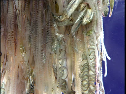 different types of portuguese man o' war tentacles, bermuda - portuguese culture stock videos & royalty-free footage