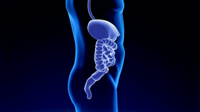 digestive system - ileum stock videos & royalty-free footage