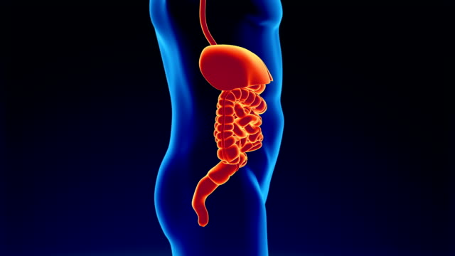 digestive system - belly stock videos & royalty-free footage