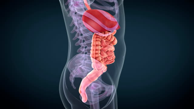 digestive system - anatomy stock videos & royalty-free footage