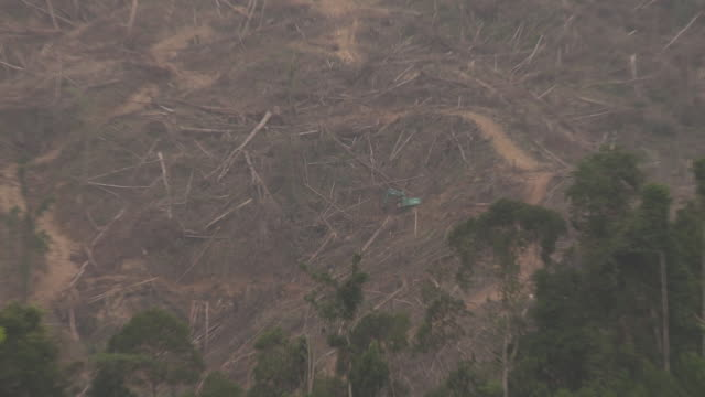 digger logging rainforest, zoom in and out to show scale of area - bagger stock-videos und b-roll-filmmaterial