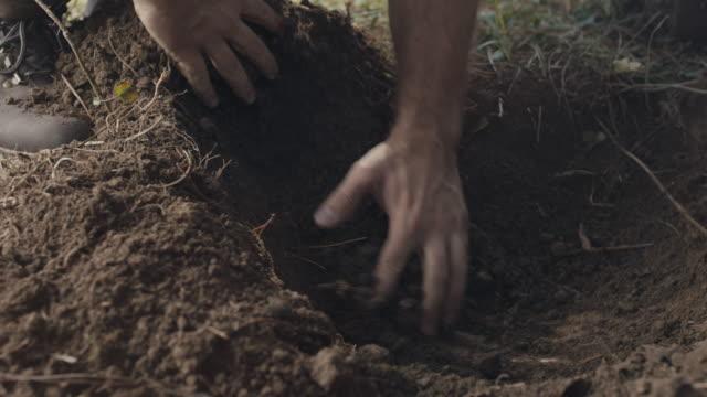ein loch mit bloßen händen graben - bare tree stock-videos und b-roll-filmmaterial