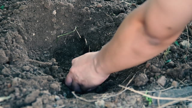 digging in soil to plant trees ginger. - ginger spice stock videos and b-roll footage