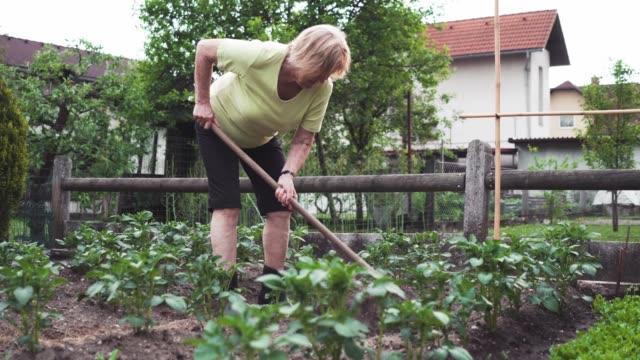 vídeos de stock, filmes e b-roll de cavando o jardim - processo vegetal