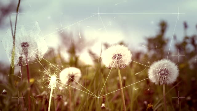digital abstract nature complexity concept with dandelions - image stock videos & royalty-free footage
